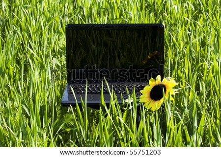 laptop and a sunflower on green grass - stock photo