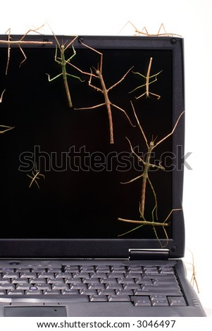 Laptop covered by stick bugs over keyboard and screen suited for any computer protection theme - stock photo