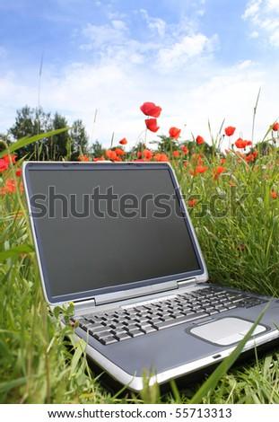 laptop in a corn poppy field - stock photo