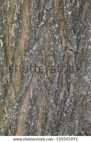 Larch bark - stock photo