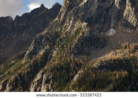 Larch Trees in the North Cascade Mountains. Autumn in the cascades means the changing colors of the larch trees to bight yellow contrasting sharply with the evergreen firs and pine trees. - stock photo
