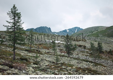 Larches among the rocks in the Altai Mountains in spring - stock photo