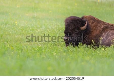 buffalo prairie black single men Prairie gathered swags annie buffalo check lined prairie swag set - black 72x36x18 $2395.