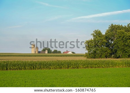 large amish country farm with acres and acres of unpicked fresh organic corn  - stock photo