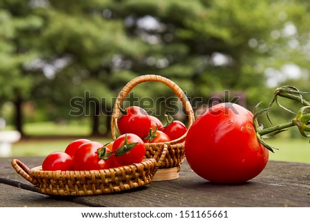 Large and small cherry tomatoes sitting on picnic table  - stock photo