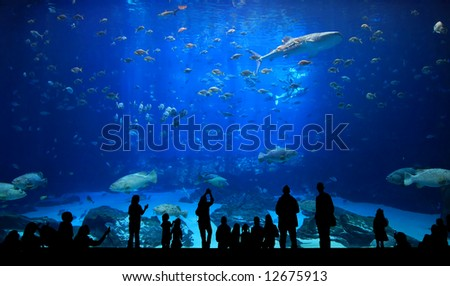 Large Aquarium - People Silhouette looking at the amazing fish - stock photo