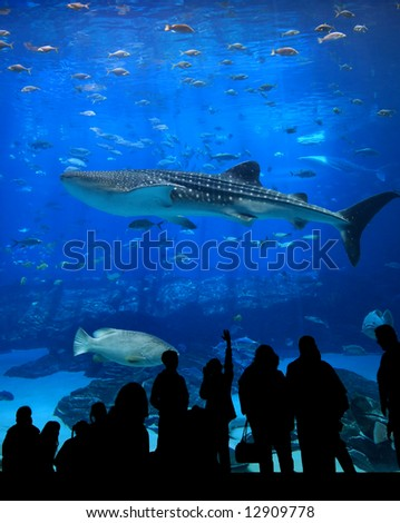 Large Aquarium - People Silhouetted looking at whale shark swim past - stock photo
