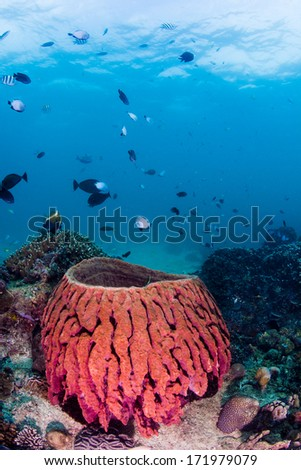 Large barrel sponge on a healthy coral reef - stock photo