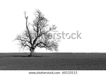Large barren tree in a freshly plowed field - stock photo