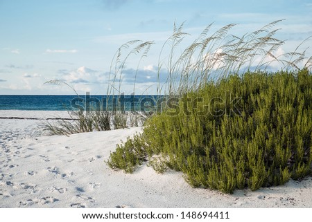 Large beach rosemary and sea oats on white sand Florida beach.