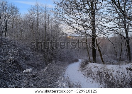 Large beautiful winter forest in the new year