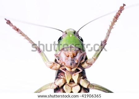 large beetle - stock photo