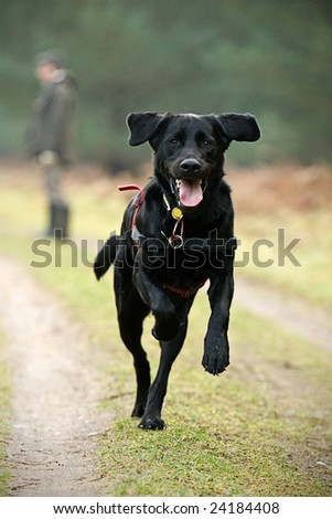 Large Black Dog Running in Countryside - stock photo