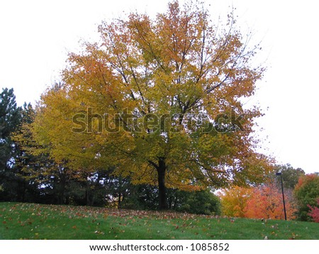 Large Blooming Tree - stock photo