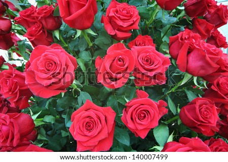 Large bright bouquet of freshly cut big beautiful red roses.  - stock photo