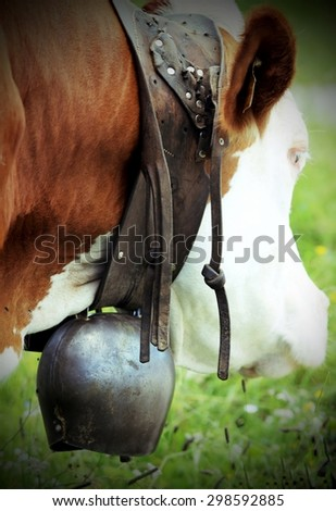 large bronze cow Bell cow in cattle breeding - stock photo