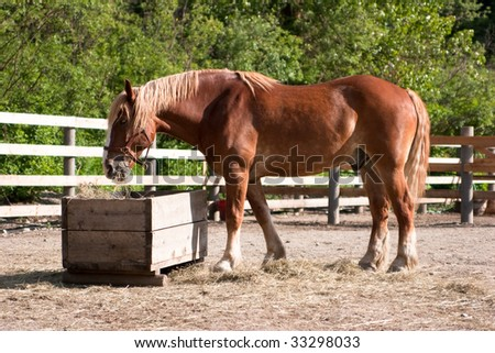 Large brown horse in corral eating hay
