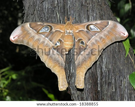 Large brown moth - stock photo