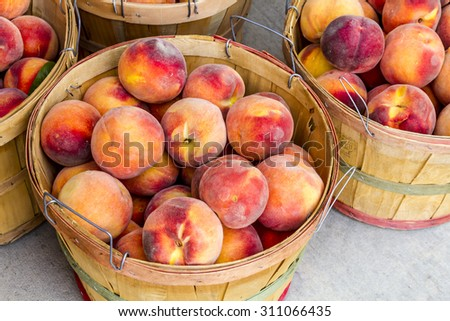 Large bushel baskets filled with fresh from the orchard organic yellow peaches for sale at roadside produce stand - stock photo