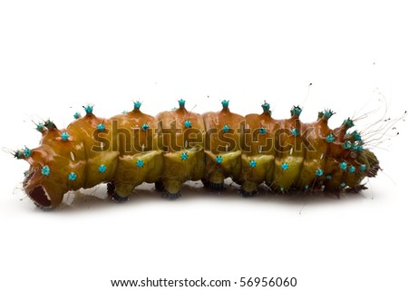 large caterpillar on a white background - stock photo