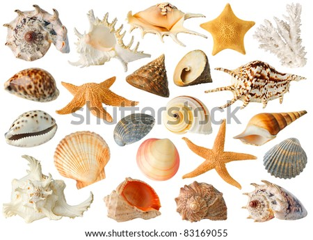 Large collection of sea shells isolated on white - stock photo