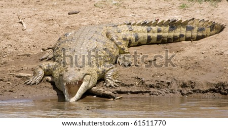 large crocodile with mouth open