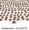 Large crowd of Brown Marmorated Stink Bug or Shield Bug isolated against white background - stock photo
