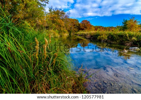 Large Cypress Trees with Stunning Fall Color Lining a Crystal Clear Texas Hill Country Stream. - stock photo