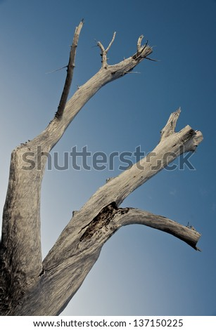 Large dead tree trunk of driftwood set against a blue sky. - stock photo