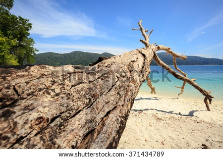 Large dead trunk on sea beach in summer