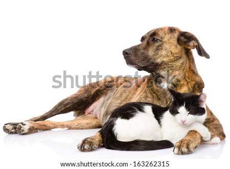 Large dog and cat lying together. isolated on white background - stock photo
