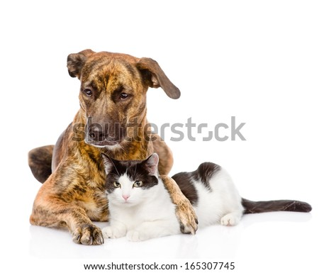 Large dog and cat lying together. isolated on white background