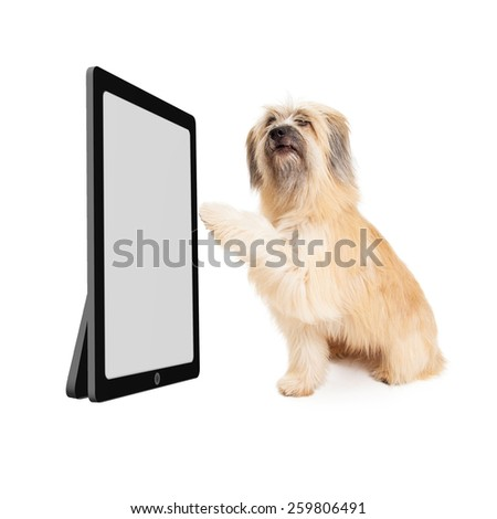 Large dog looking at a blank screen on a big tablet device and lifting paw to scroll - stock photo