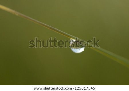 Large drop of water on blade of grass reflecting grassy landscape - stock photo