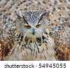 Large eagle owl with big round yellow eyes - stock photo