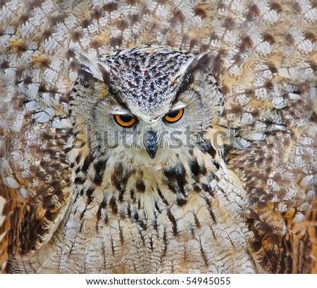 Large eagle owl with big round yellow eyes - stock photo