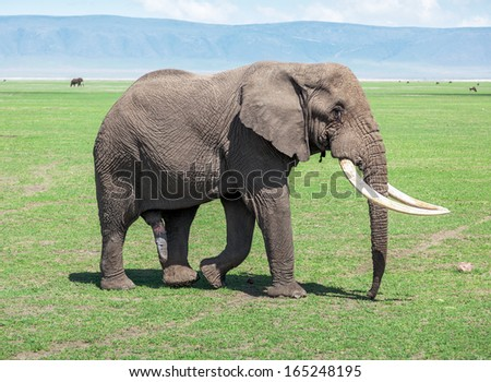 Large elephant male in Crater Ngorongoro National Park - Tanzania, Eastern Africa