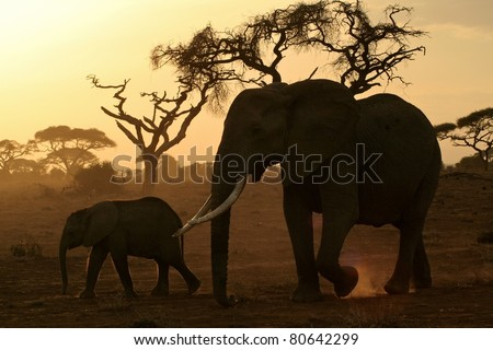 Large elephant matriarch and her calf walking across the dusty savanna plain - stock photo