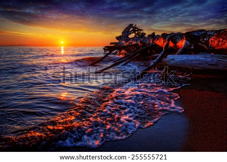 Large fallen tree on the beach at sunset - stock photo