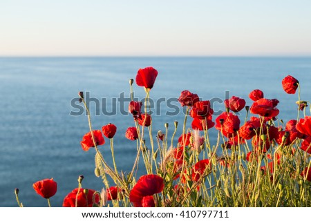 large field of poppies - stock photo