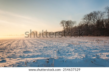 Large field with stubble of fodder maize covered with a layer of snow at approaching twilight in a very special light. - stock photo