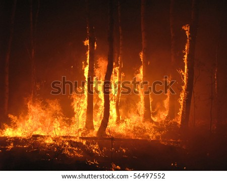 Large flames of forest fire - stock photo