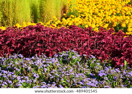 Large flowerbed with marigolds and red coleus