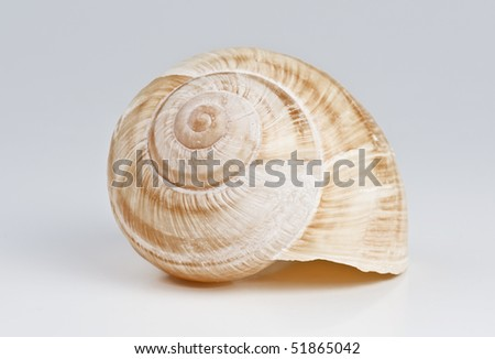 large garden snail - stock photo