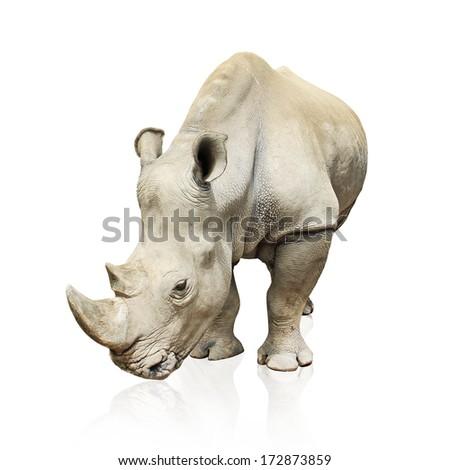 large gray rhinoceros isolated on white background - stock photo