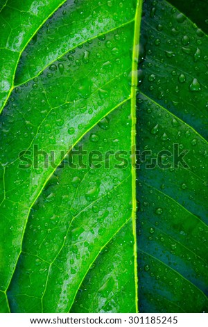 large green leaf with water drops close-up - stock photo