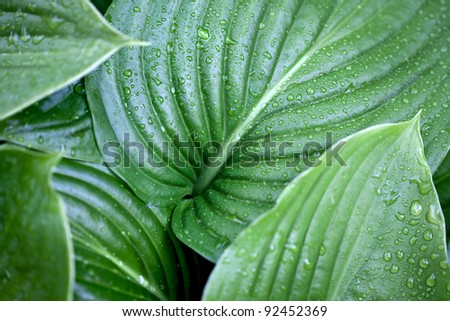 Large Leaf Stock Photos Images Pictures Shutterstock