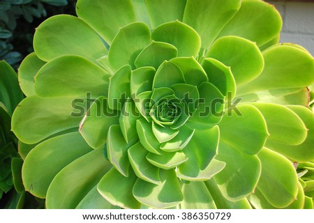 Large green succulent