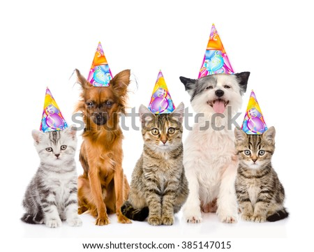 Large group cats and dogs in birthday hats. isolated on white background
