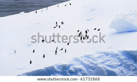 Large group of Adelie and Chin Strap Penguins on a beautiful Iceberg at Antarctica. - stock photo